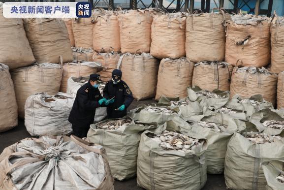 货物申报品名为扇贝壳实为洋垃圾 扇贝壳变禁止进口固体废物
